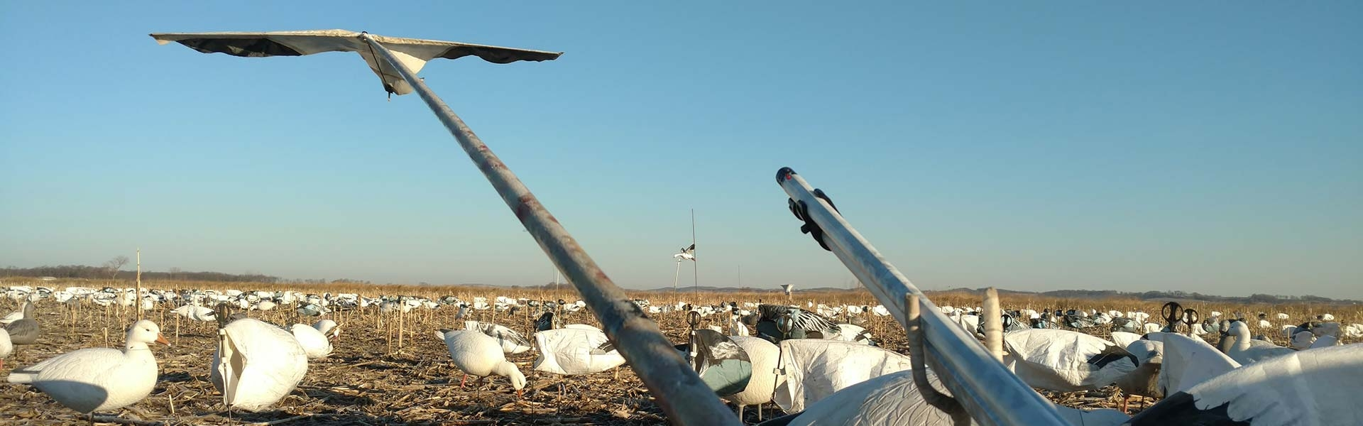 South Dakota Spring Snow Goose Hunts